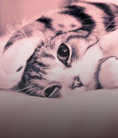Ventajas de adoptar un gato vs un tío
